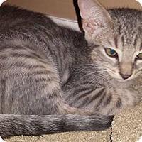 Adopt A Pet :: Washington - New Milford, CT
