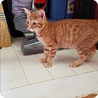 Adopt A Pet :: Neptune - Nashville, TN
