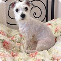 Adopt A Pet :: Jack - Surrey, BC