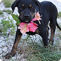 Adopt A Pet :: Beatrice - Groveland, FL