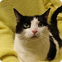 Adopt A Pet :: Bing - Berlin, CT