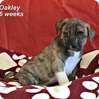 Adopt A Pet :: Oakley - Yreka, CA