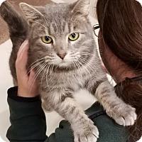 Adopt A Pet :: Taylor - St. Louis, MO