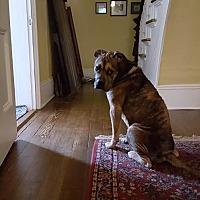 Adopt A Pet :: Gordon - Newport, VT