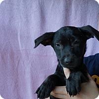 Adopt A Pet :: Cotton - Oviedo, FL