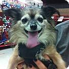 Adopt A Pet :: Nanook