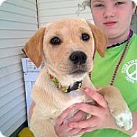 Adopt A Pet :: Bella - Allentown, PA