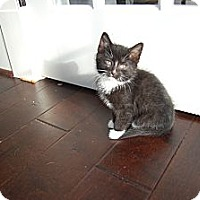 Adopt A Pet :: Starla - Jeffersonville, IN