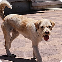 Adopt A Pet :: Katie - Torrance, CA