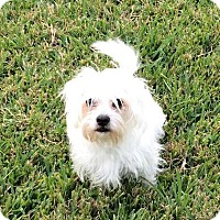 Adopt A Pet :: Fluffy - Tomball, TX