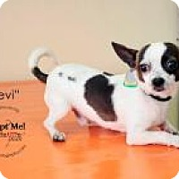 Adopt A Pet :: Levi - Shawnee Mission, KS