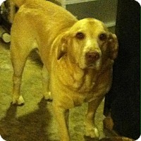 Adopt A Pet :: Sampson - Sherman, CT