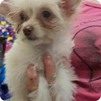 Adopt A Pet :: Gizmo - S. Pasedena, FL