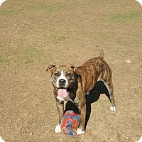 Adopt A Pet :: Delilah - bridgeport, CT