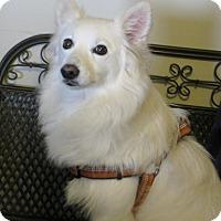 Adopt A Pet :: Deidra - Prole, IA