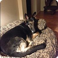 Adopt A Pet :: Stetson - Houston, TX