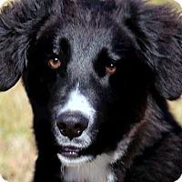 Adopt A Pet :: OZZIE(SO SMART!!) - Wakefield, RI