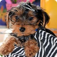 Adopt A Pet :: Johnny - Pueblo, CO