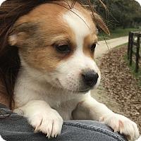 Adopt A Pet :: Zipper - adoption pending - Stamford, CT