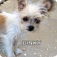 Adopt A Pet :: Binky (Posh Puppy) - Lindsay, CA