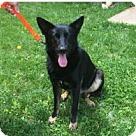 Adopt A Pet :: Mulder 4348