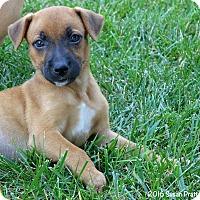 Adopt A Pet :: Winnie - Bedford, VA