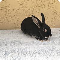 Adopt A Pet :: Landis vaby - Bonita, CA