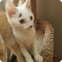 Adopt A Pet :: Sugar - Highland, IN