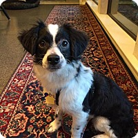 Adopt A Pet :: Naveen Andrews - Brooklyn, NY