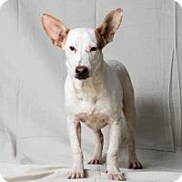 Adopt A Pet :: Crane - Tulsa, OK