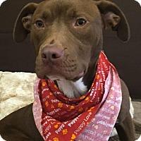 Terrier (Unknown Type, Medium) Mix Dog for adoption in Flint, Michigan - Cheeto