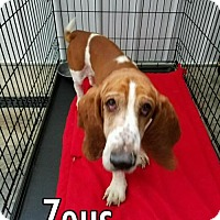 Adopt A Pet :: Zeus (oct 2016) - Cincinnati, OH