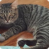 Adopt A Pet :: Sugarbear - Clarksville, TN