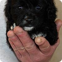Adopt A Pet :: FRANKLIN - Corona, CA