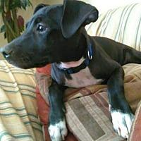 Adopt A Pet :: Lexi-Marie - Phoenix, AZ