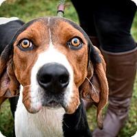Adopt A Pet :: Tracker - NEEDS FOSTER! - Washington, DC