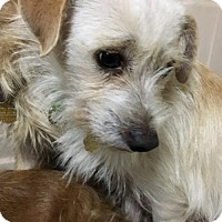 Adopt A Pet :: Moe - Seal Beach, CA