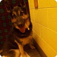 Adopt A Pet :: A452988 - Upper Marlboro, MD