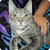 Adopt A Pet :: Sarah - Floral City, FL
