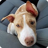Adopt A Pet :: Flo - Gainesville, FL