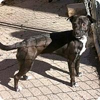 Adopt A Pet :: Lola - Concord, NC