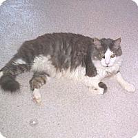 Adopt A Pet :: Teddy - Grand Chain, IL