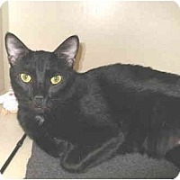 Adopt A Pet :: Khyber - Mesa, AZ