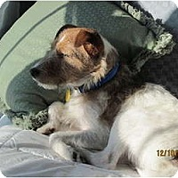 Adopt A Pet :: Burton - Omaha, NE