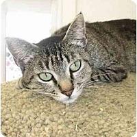 Adopt A Pet :: Sofia - El Cajon, CA
