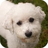 Adopt A Pet :: Theo - La Costa, CA
