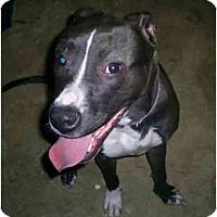 Adopt A Pet :: Muffin Stuff - Raymond, NH