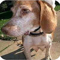 Adopt A Pet :: Dinah - Novi, MI