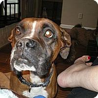 Adopt A Pet :: Annie - Apex, NC