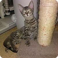 Adopt A Pet :: Adonis - Lantana, FL